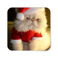grumpy cat christmas hat. Beautiful Grumpy Christmas Grumpy Cat In Santa Hat U0026 Suit Square Sticker In C