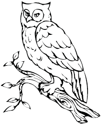 Owl Coloring Page Mtkguideme