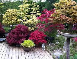 5 best trees for small gardens wise
