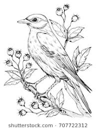 pictures of birds for drawing. Perfect Birds Linear Bird And Flower Berries Line Drawings Ink Drawing Hand Drawn  Floral Inside Pictures Of Birds For Drawing W