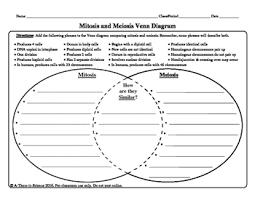 Venn Diagram Meiosis And Mitosis Mitosis And Meiosis Venn Diagram