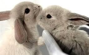 coniglietti che si annusano e leccano a vicenda