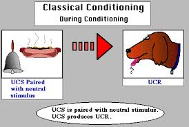 Classical Conditioning In The Classroom Educational Psychology Interactive Classical Conditioning