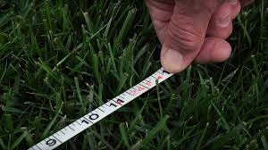 How Much Fertilizer Should I Use For My Lawn Homegrown