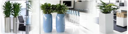 office plant displays. Office Plant Displays S