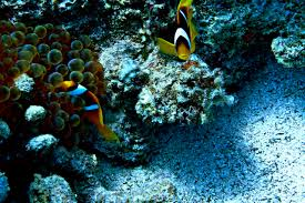 diving dahab underwater photo essay angie away nemo