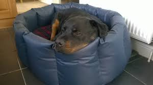 hypoallergenic dog beds tuffies dog beds