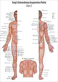 Leg Acupressure Points Chart Akupunkturtafel Chart 2 Tungs Extraordinary Acupuncture