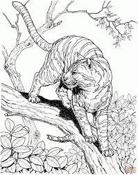 Baby Tijger Baby Tiger Wallpapers Hd Desktop Wallpapers 4k Hd