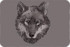 gray wolf face drawing. Unique Drawing How To Draw A Wolf Face  Step 11 For Gray Face Drawing T