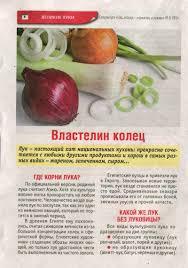 Луковые овощи реферат На этой странице собраны материалы по запросу луковые овощи реферат