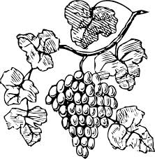 grapes clipart black and white. grape vine clip art free | grapes - vector online, royalty · clipart black and whitejournal white