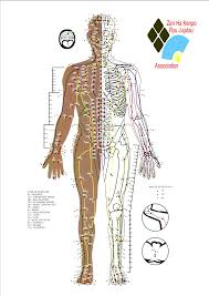 Acupuncture Point Chart Free 39 Inquisitive Acupressure Pressure Points Chart