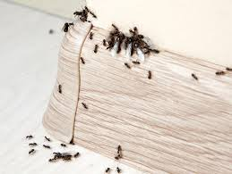 42+ Ants With White Dot On Back Gif