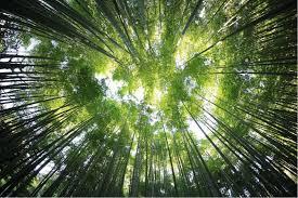 Image result for sun peeking through trees