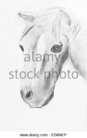 Per Bambini Disegno Testa Di Cavallo Dalla Matita Nera Foto