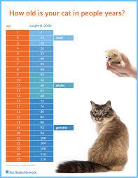 Kitten Growth Chart Weight Elegant Cat Weight Chart By Age Michaelkorsph Me