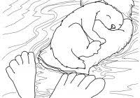 Otter Coloring Pages With Kleuterdigitaal Kleurplaat 02 Stencils