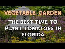 the best time to plant tomatoes in