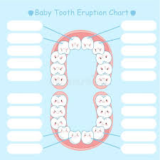 Tooth Eruption Stock Illustrations 279 Tooth Eruption