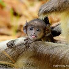 wildlife tourism archives breathedreamgo wildlife in kanha national park a photo essay