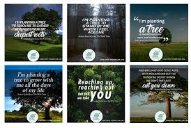Tree Quotes Cool Tree Quotes By Andrea Koehle Jones Summerhill By The Sea Productions