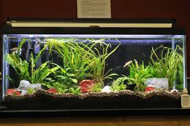 aquarium furniture design. Aquarium Furniture Stands Design Uk India Brisbane M