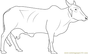 Small Picture Cow Coloring Pages Printable Coloring Pages of Cows