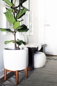 table appealing large indoor planter 2 interior designers best kept ping secrets plant decor ideas on