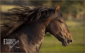 professional horse face photography. Fine Photography Whistle  Professional Horse Photography  Equine Photography By  Entirely Marketingu0027s Sibbea In Professional Horse Face