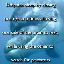 Image result for dolphins sleeping with one eye open