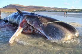 クジラ の おなか から プラスチック