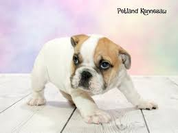 petland kennesaw 115 photos 59 reviews pet s 840 ernest w barrett pkwy nw kennesaw ga phone number yelp