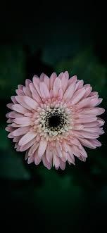 nd69-flower-center-pink-wallpaper