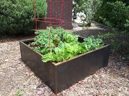 growing vegetables in corten steel planter beds