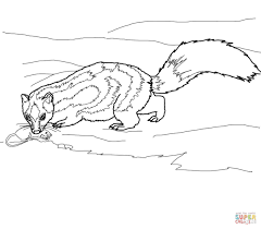 Small Picture Spotted Skunk Catches a Rat coloring page Free Printable