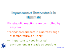 What Is Homeostasis In Biology Importance Of Homeostasis In Mammals Different Branches Of