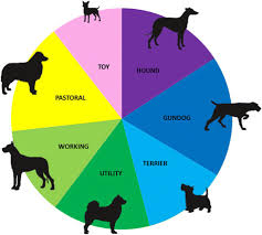 A Chart Of Dogs Grouping Of Purebred Dog Breeds The 215 Breeds Recognized