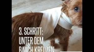 Ängstlicher hund vertrauen aufbauen