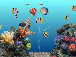 3d Aquarium Desktop Background