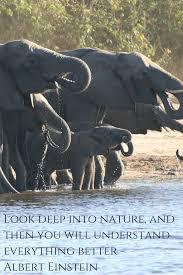 Albert Einstein Quote With Photo Of Elephants In Africa