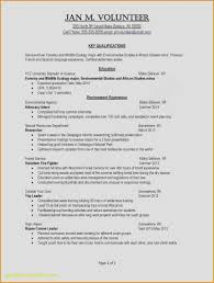 Standard Font Size And Style For Resume Resume Template