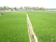 """Résultat de recherche d'images pour """"rizières, photos"""""""