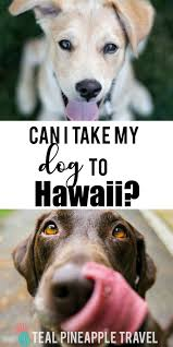 taking a dog to hawaii can you bring