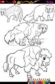 Small Picture Binturong Animal Coloring Pages Binturong Coloring Book Or Page