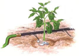 Small Picture Sonoma County Nurseries Resource Guide Drip Irrigation for Great