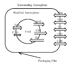 Schematic Concept Of Modified Atmosphere Packaging