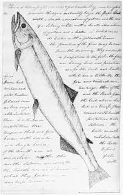 lewis and clark expedition essay college papers for money mla  clark s drawing of white salmon trout catalog number orhi 96334