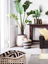 Indoor Plants Living Room 6 Ways To Give Houseplants A Chance Thou Swell