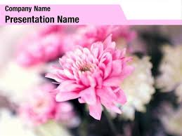 Flower Powerpoint Free Spring Pink Flower Powerpoint Template Backgrounds